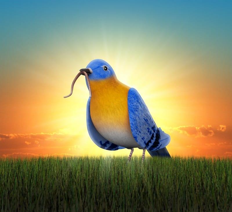 vogel afbeelding